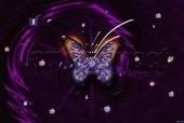 Laptop Skin Butterfly 104