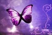 Laptop Skin Butterfly 013